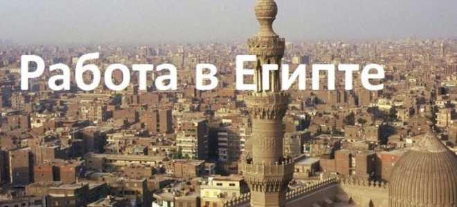 Работа в Каире