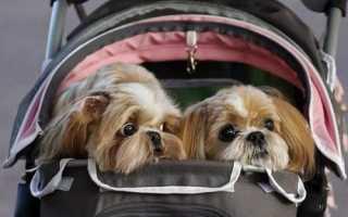 Правила вывоза собак и других животных за границу