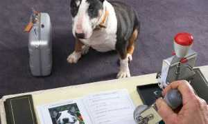 Правила ввоза домашних животных в Европу