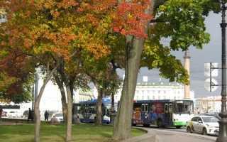 Сколько стоит проезд для пенсионеров на трамвае чижик в СПб