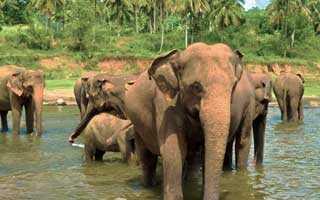 Оформление визы в Шри-Ланку для украинцев